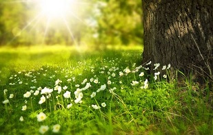 the sun shines, white flowers on the green grass